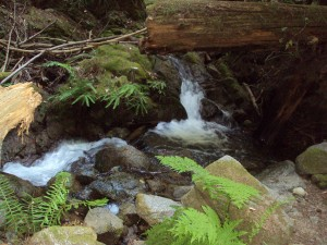 Fall Creek Trail Santa Cruz
