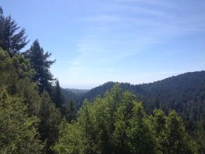 Henry Cowell State Park, Santa Cruz CA